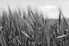 Formazione obbligatoria per utilizzatori professionali di prodotti fitosanitari