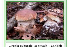Associazione Firenzeintralice: corso propedeutico alla raccolta ed al consumo di funghi